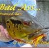 BadAss_peacockBass_leadPhoto2